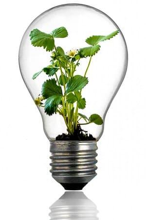 Les ampoules ne sont pas forcément dangereuses pour la planète - on peut les recycler