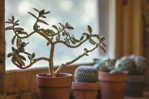 Ne vous éparpillez pas trop quand il s'agit d'ajouter des plantes chez vous
