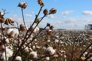 Le coton bio, cela existe !