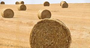 Il n'y a pas que les agriculteurs qui font leur propre paillage