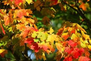 N'oubliez pas de ramasser les feuilles mortes à l'automne