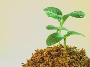 Nous travaillons dans le respect de valeurs écologiques et solidaires
